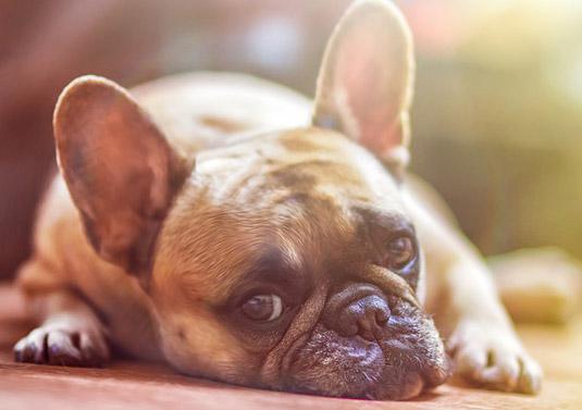 dog feeling ill