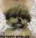 addisons disease dog