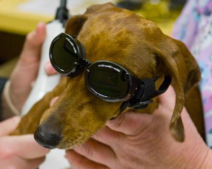 dog elbow laser treatment