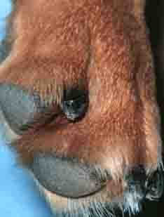 dog nails - 234px x 309px - example 3
