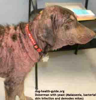 dog skin diseases