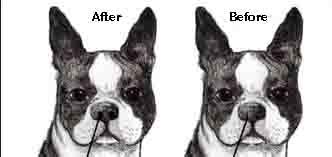 stenotic nares surgery