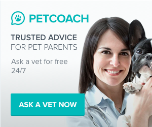 Ask a Vet for Free 24/7