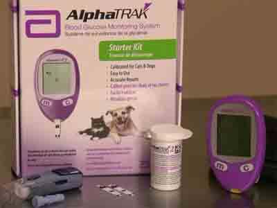 diabetes mellitus in dogs- blood glucose monitoring kit