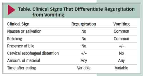 dog vomiting symptoms