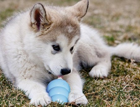 puppy teething toy
