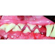 Dog Teeth Medium Muzzle, Buccal View