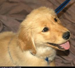 behavior_dog_puppy