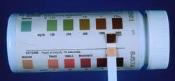 Dog Blood Glucose Test: Positive