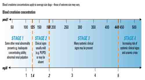 Dog Kidney Failure Stages - Table 1