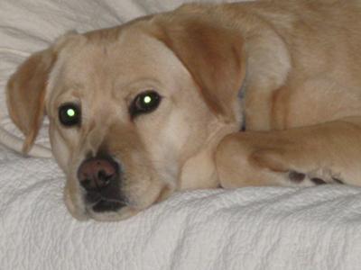 Mast Cell Tumor on Dog Lip
