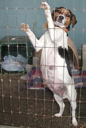 Dog Pregnancy - Example 1