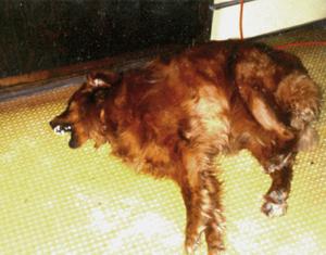dog health seizures