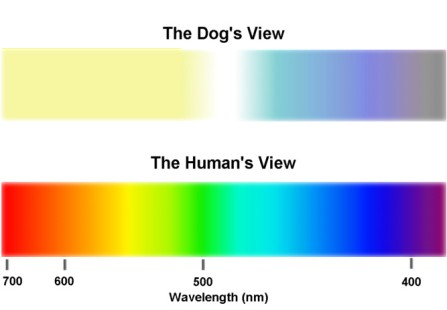 Dog Eye Color Spectrum Compared to Human Eye Color Spectrum
