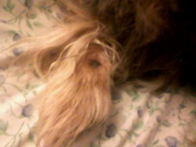 Dog Gone Dog Beds