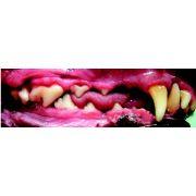 Long Muzzle Greyhound Buccal Canine Teeth