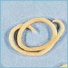 Canine Parasites: Roundworm