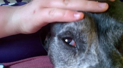 Dog with Dry Eye