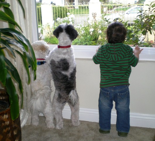 two dogs looking outside at cat