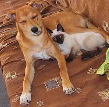 Cats and Dogs Can Live Together Peacefully