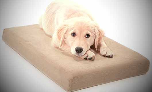 dog bed removable cover
