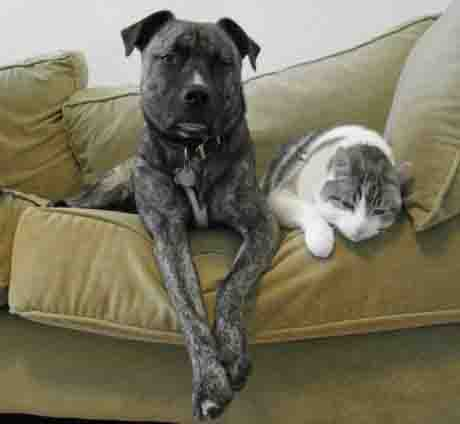 Dog and Cat Happily on Couch Together