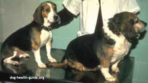 Dog Comparison - Hypothyroidism