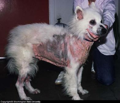 Dog Shampok That Smells Like Puppy