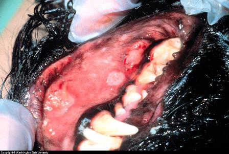 dog ulcers