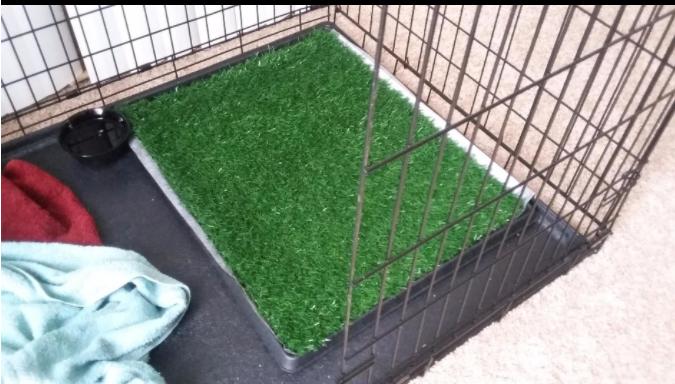 dog grass training pad