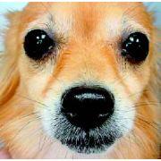 Medium Muzzle Dog Picture canine teeth